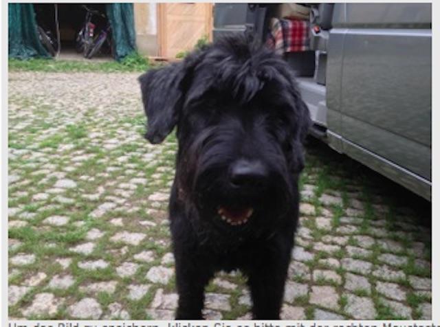 weitergehend übermittelte Bilder zusätzlich zum Inserat enttarnen den Hund